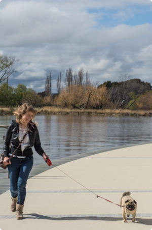 Young woman walking her pug around a lake in Canberra Australia